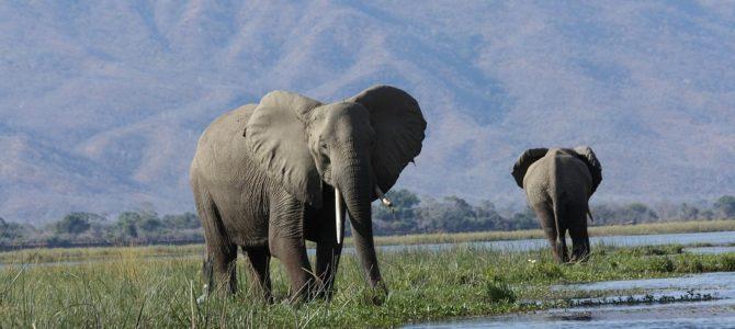 Hårdare tag mot illegal handel med vilda djur och växter
