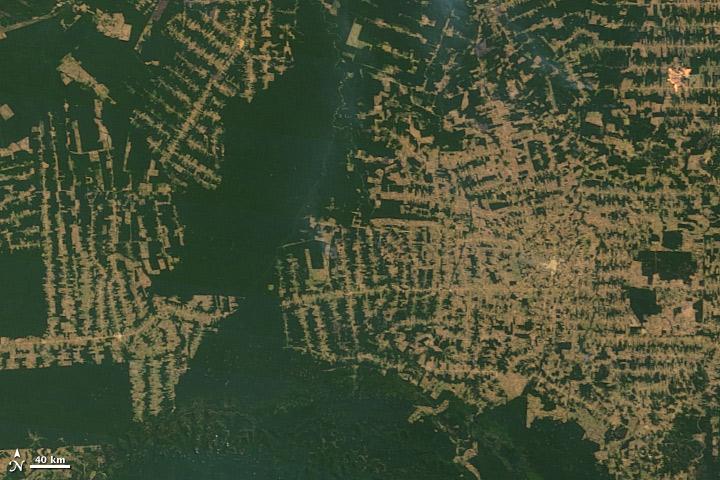 Bild på avskogning av Amazonas